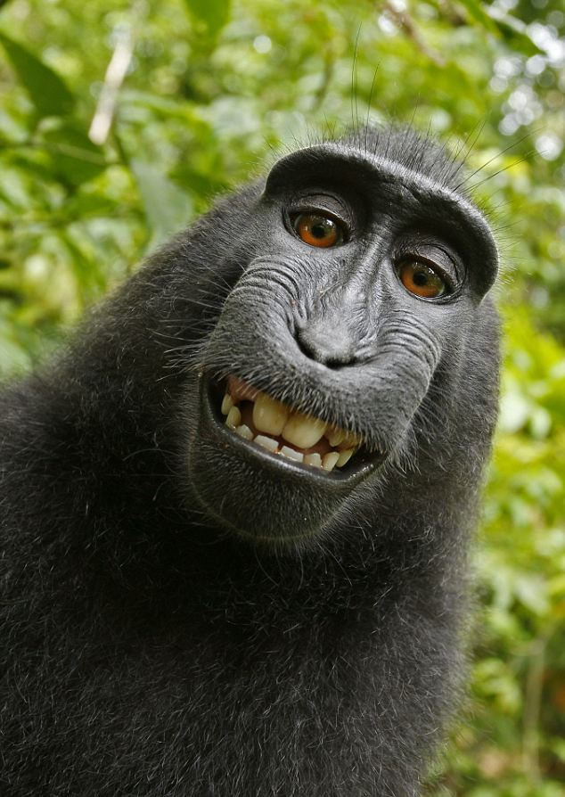 monkey-takes-photos-on-camera